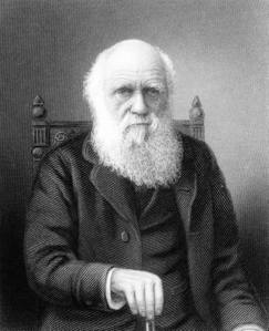 Engraving of British naturalist Charles Darwin (1809-1882) who developed theory of evolution by natural selection (1901)
