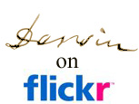 Darwin on Flickr